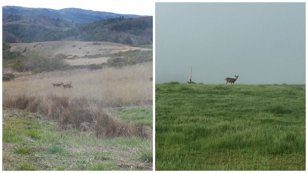 Djerassi before and after